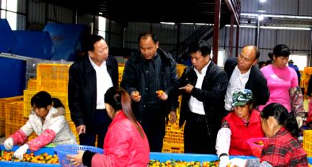 苍梧县农机局潘树坚局长一行考察柑子销售情况