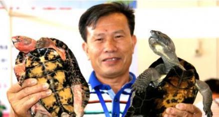 柳州市龟类产业协会银景浩会长:龟鳖养殖 重在爱心