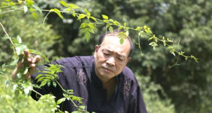 香港国际商会联合体江远东先生来全州县考察调研野生藤茶