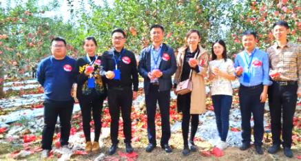 陕西省:延安苹果脆脆甜甜香万家 唱响宝塔十月主旋律