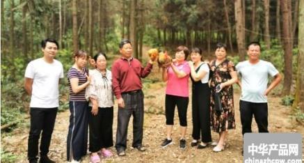 全州县大西江镇满稼村生态养鸡基地 美妙鸡鸣唱山林