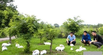 全州县福龙专业兔子养殖合作社:肉兔养殖 振兴乡村经济