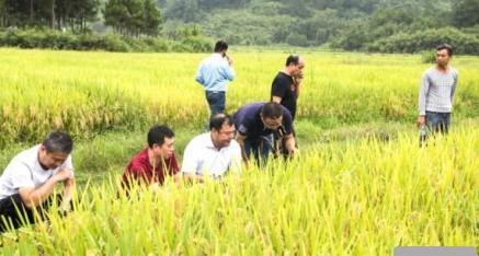 """桂林市全州县粮食和物资储备局组织""""看禾选种""""观摩活动"""