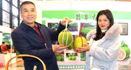 武宣县飞鼠漕水果种植合作社:翡翠青柚、红宝石青柚