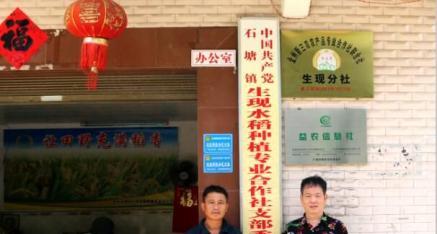 全州县石塘镇生现水稻种植合作社:发展粮食生产 助乡村振兴