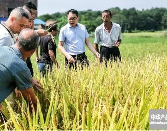 全州县方舟富硒生态农业专业合作社发展优质水稻种植
